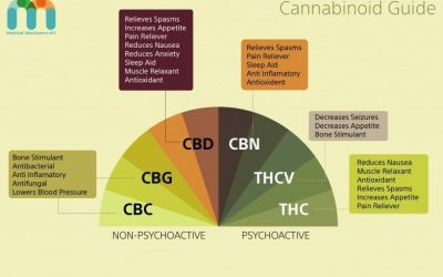 What is the Endocannabinoid System, and How Does It Work?